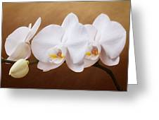 White Orchid Flowers And Bud Greeting Card