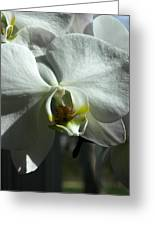 White Orchid In Spring Greeting Card