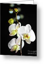 White Orchid On Black Bw Greeting Card