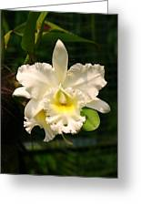 White Orchid Singapore Greeting Card