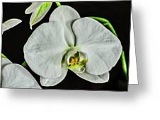 White Orchid On Black Greeting Card