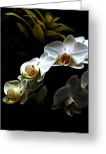 White Orchid With Dark Background Greeting Card