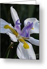 White Orchid With Yellow And Purple Greeting Card