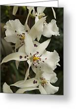 White Orchids 2 Greeting Card