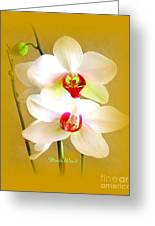White Orchids Greeting Card by Doris Wood
