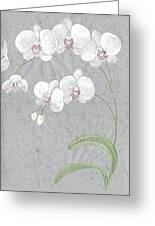 White Orchids On Sprigs  Greeting Card