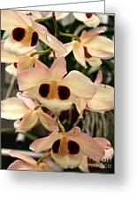 White Orchids With A Hint Of Pink Greeting Card