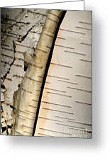 White Paper Birch Tree Bark Greeting Card
