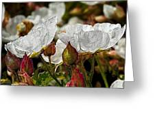 White Paper Petals Greeting Card