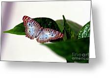 White Peacock Butterfly 2 Greeting Card