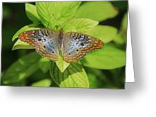 White Peacock Butterfly I Greeting Card