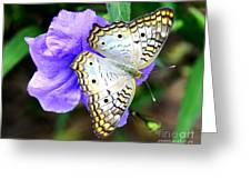 White Peacock Butterfly On Purple 2 Greeting Card