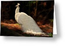 White Peacock In Golden Hour Greeting Card
