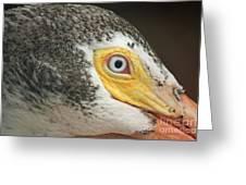 White Pelican Eye Greeting Card