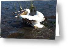 White Pelican In The Marsh Greeting Card