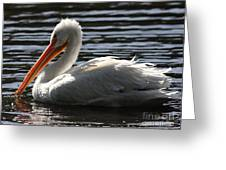 White Pelican . Ripple Waters Greeting Card