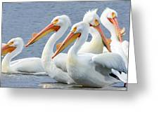 White Pelicans At Nelson Lake Greeting Card