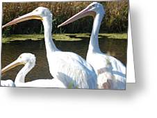 White Pelicans Greeting Card by Heather Chaput