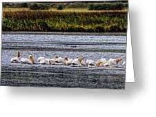 White Pelicans Kootenay Lake Greeting Card