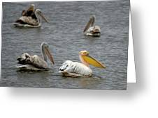 White Pelicans On Lake  Greeting Card