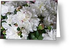 White Peony With Red Traces Greeting Card