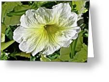 White Petunia - Solanaceae Greeting Card
