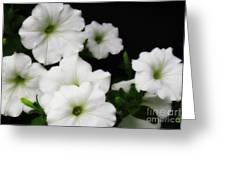 White Petunias Greeting Card