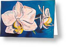 White Phalaenopsis Orchids Greeting Card