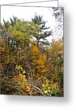 White Pine Hollow State Forest Greeting Card