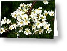 White Plum Blossoms Greeting Card