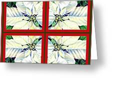 White Poinsettia Quartet Greeting Card