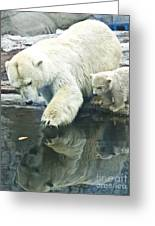 White Polar Bear With Baby Greeting Card