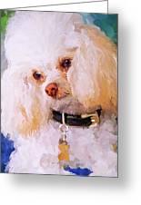 White Poodle Greeting Card by Jai Johnson