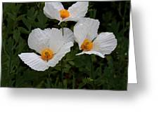 White Poppy In Cube Greeting Card