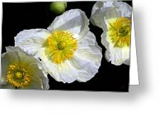 White Poppy Trio Photograph Greeting Card