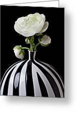 White Ranunculus In Black And White Vase Greeting Card
