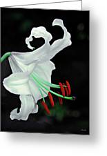 White, Red And Green Lily Greeting Card