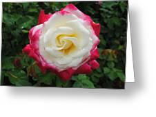 White Red Rose Greeting Card