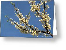 White Redbud Branch In May Greeting Card