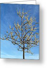 White Redbud Tree In May Greeting Card
