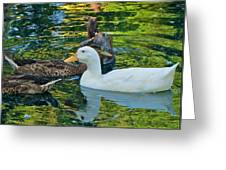 White Reflection Greeting Card