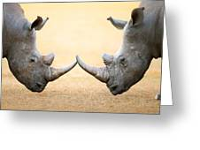 White Rhinoceros  Head To Head Greeting Card