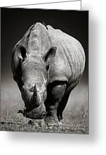 White Rhinoceros  In Due-tone Greeting Card