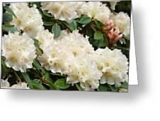 White Rhodies Landscape Floral Art Prints Canvas Baslee Troutman Greeting Card