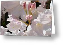 White Rhodies Pink Rhododendrons Flowers Art Prints Canvas Botanical Baslee Troutman Greeting Card