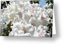 White Rhododendrons Flowers Art Prints Baslee Troutman Greeting Card