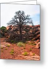 White Rim Overlook Trail Tree Greeting Card