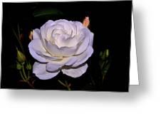 White Rose 006 Greeting Card