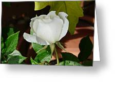 White Rose After Rain 1 Greeting Card