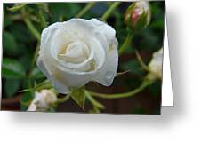 White Rose After Rain 2 Greeting Card